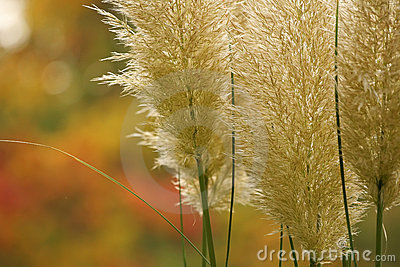 Plumes in fall