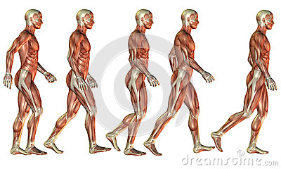 Running Male muscle study