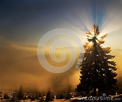 Natural Sun Star Christmas tree