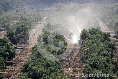 Tractor doing work in a plantation of olive trees
