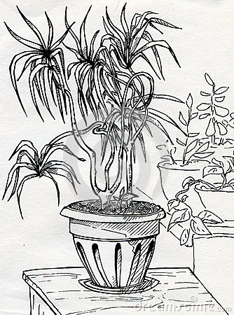 house plants drawing. house plants drawing