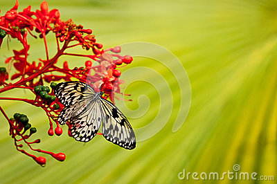 White-black butterfly on red flower with green background
