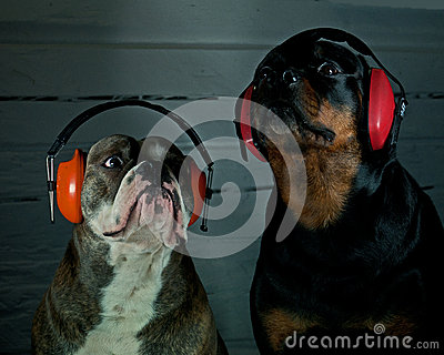 Two dogs with hearing protection