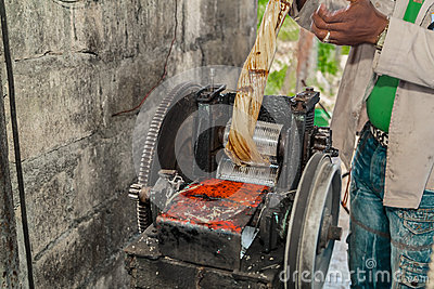Squeezing the juice from the sugarcane manual press