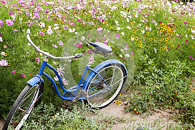 Blue Bicycle Flowers Garden