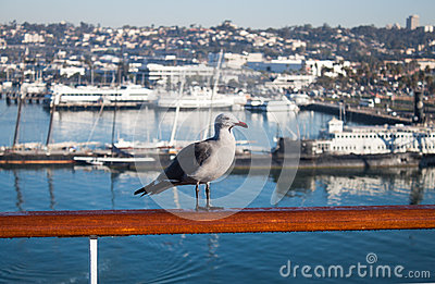 Seagull on the railing of the ship