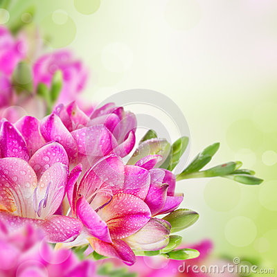 Pink flowers on green blurred background