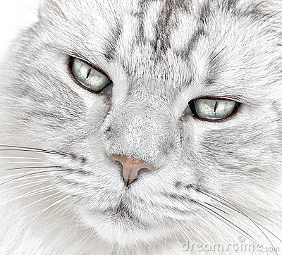 White cat whiskers