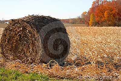 Hay roll in a rural corn field after the harvest