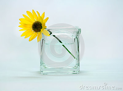A yellow colored flower in a vase.