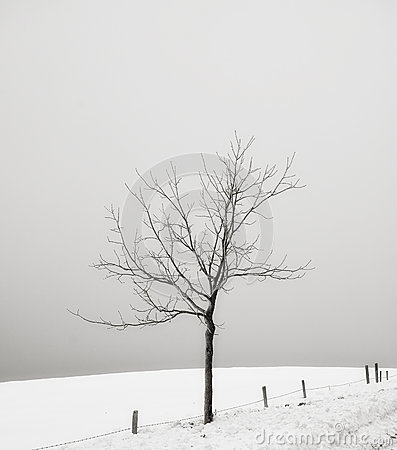 Solitary tree in a snow covered field