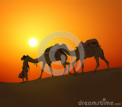 Cameleerand camels - silhouette against sunset