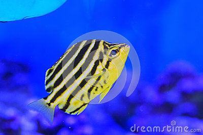 Stripey fish