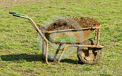 Cow manure in carts