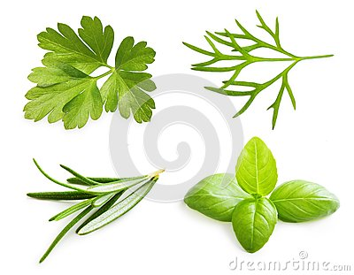 Parsley herb, basil leaves, dill, rosemary spice