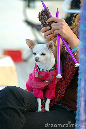Knitting Dog