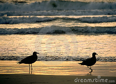 Two Gull Sunset