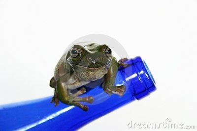 Frog on Blue Bottle
