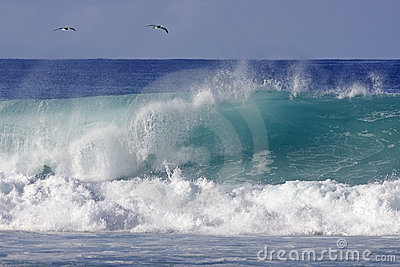 Two birds and a wave