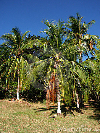 Palmtrees with painted trunks