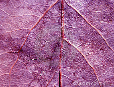 Purple Leaf Texture