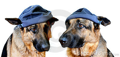 Dogs In Caps