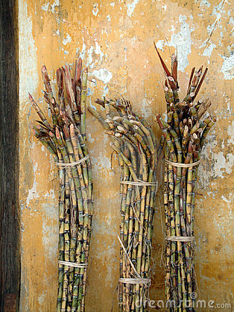 Bundles of raw sugar cane.