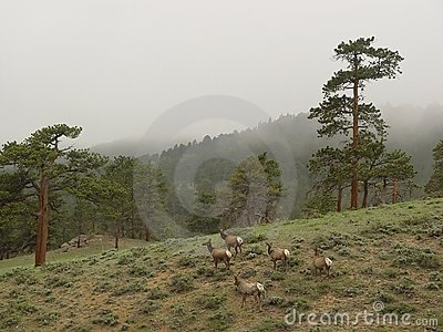 Deers in Mountains