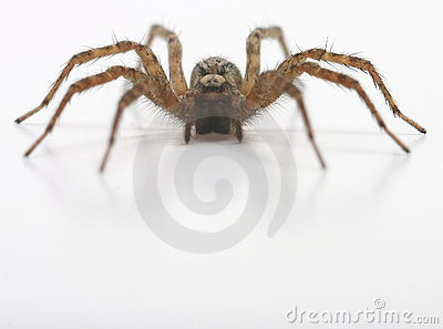 A front view of spider