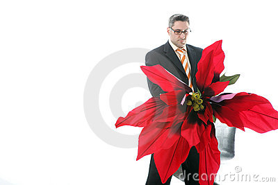 Poinsettia For You