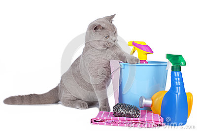 Cat with cleaning agents
