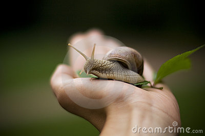 Edible snail in hand