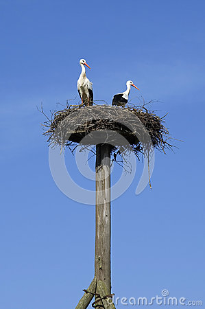 A couple of storks on the nest in blue sky