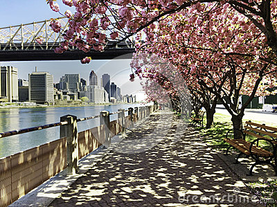 City View with Cherry Blossoms, New York