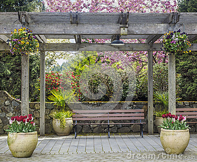 Rustic pergola with bench and flower pots under blossoming cherry tree