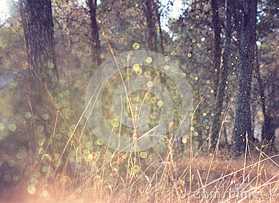 Road in forest and light burst. processed image as fantasy or magical concept