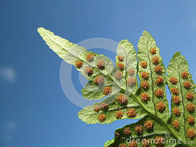 Fern and Spore