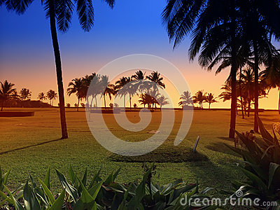 Sunset over a green lawn with palm trees. Goa.