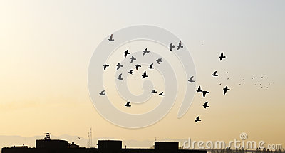 Birds with sunset