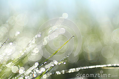Abstract background of shining morning dew