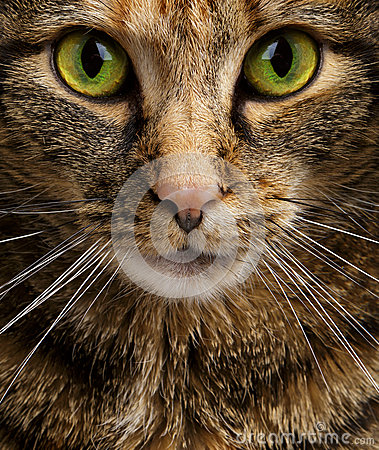 Cat Staring Intensely