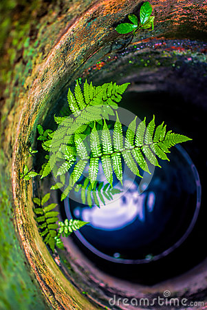 Fern in water well