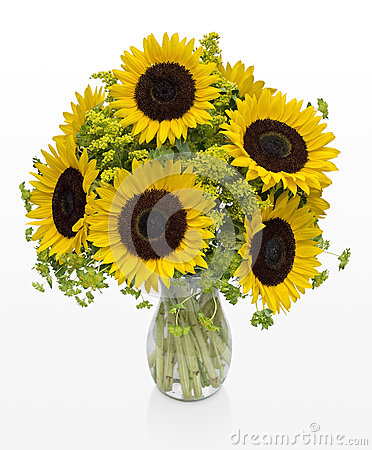 Large Sunflowers in a Vase on White Space
