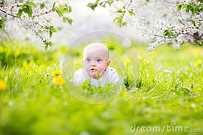 Adorable little baby boy in blooming apple garden
