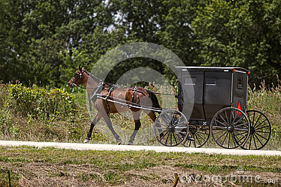 Amish horse and black buggy