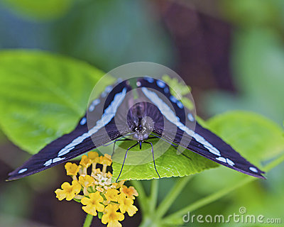 Black and blue butterfly on plant with flower