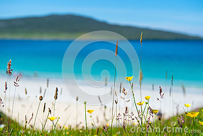 Close up of spring flowers with white sandy beach