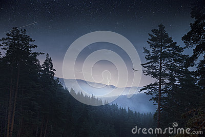 Night pine trees forest & mountain and thunder