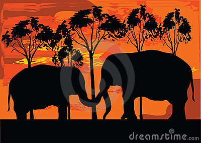 Two elephans
