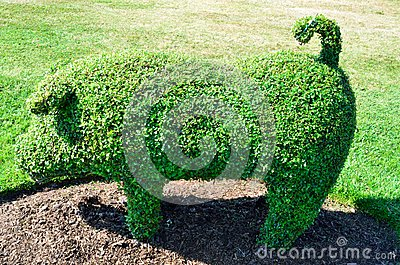 Topiary Pig from an English Garden